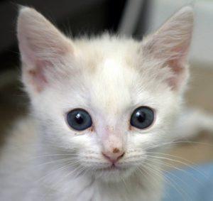 cat1-300x283
